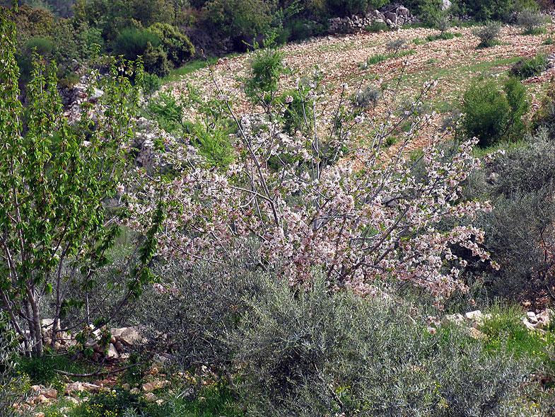 Весеннее цветение рядом с Бейт-Джан