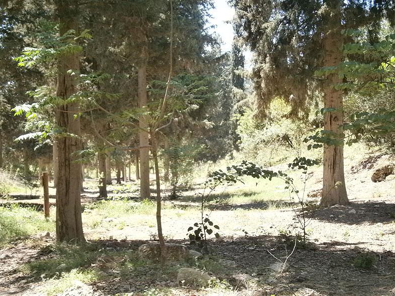 Лес в Бейт-Шеарим