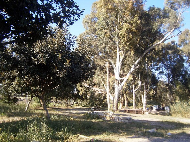 Бейт-Шемеш. Эвкалиптовая роща