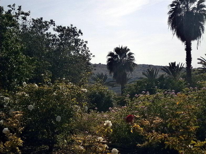 Бейт-Шемеш. Сад в центре города
