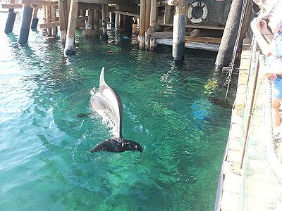 Дельфиний