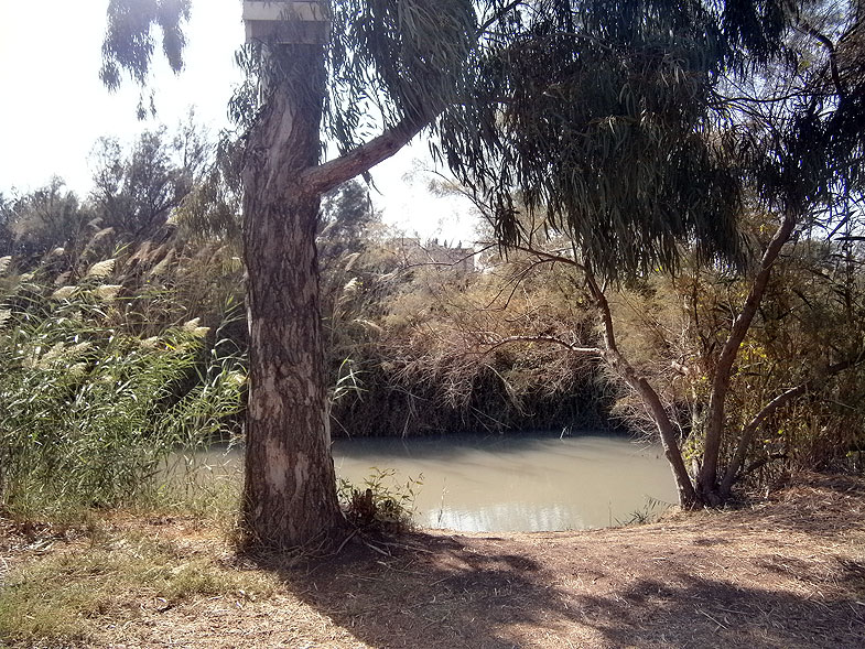 Fish ponds in the Ein Afek nature reserve