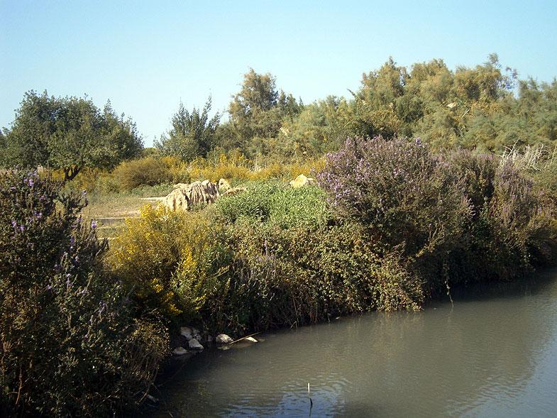 Рыбные пруды в заповеднике Эйн-Афек