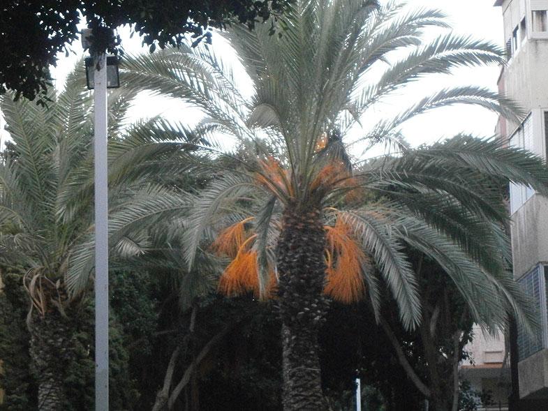 Haifa. Hadar