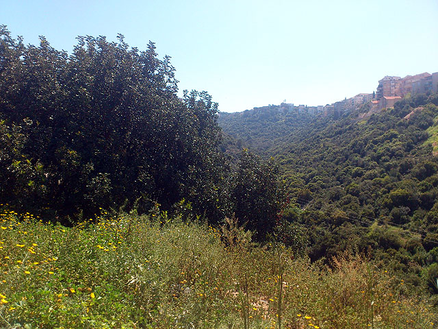 Хайфа. Вид с Кирьят-Шпринцак на Нахаль Лотем