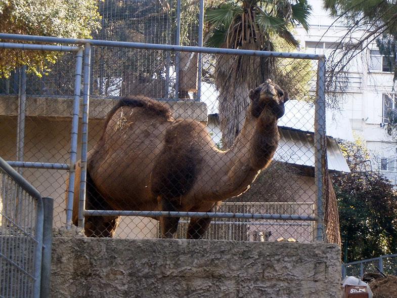 Haifa. Zoo