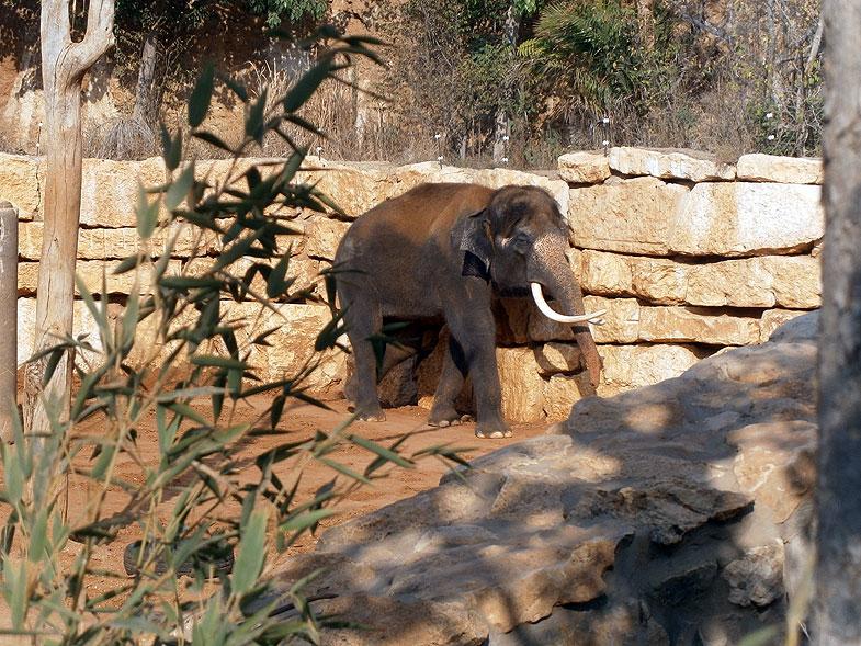 Библейский зоопарк в Иерусалиме