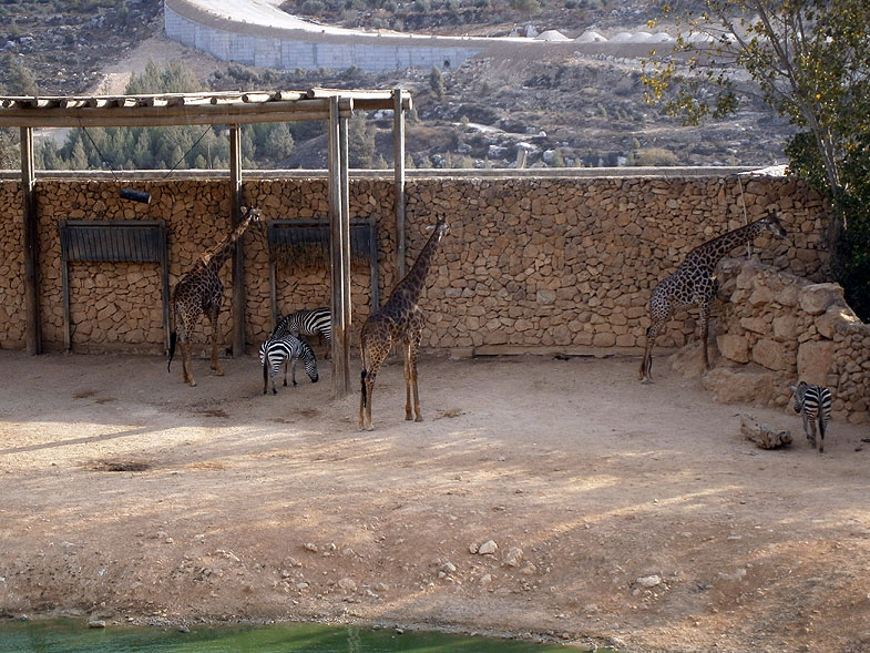 Jerusalem Biblical Zoo