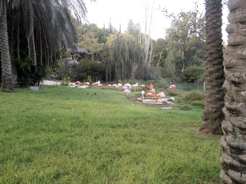 Озеро фламинго в Библейском зоопарке в Иерусалиме