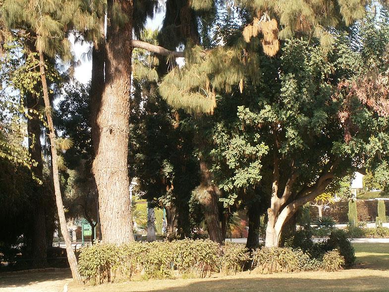 Мемориальный сад в Кфар-Сабе