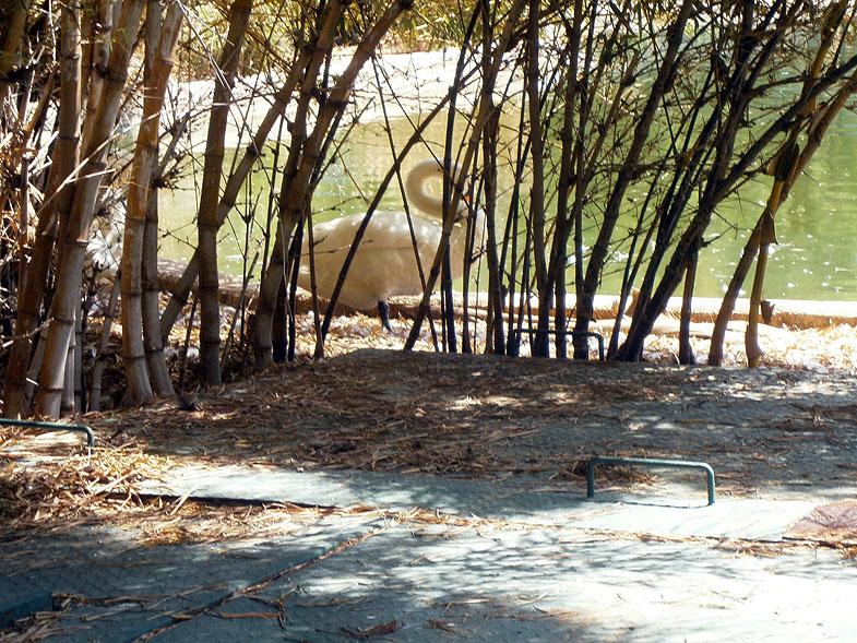 קריית מוצקין. אגם ברבורים