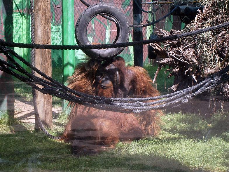 Кирьят-Моцкин. Зоопарк