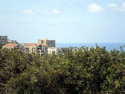 חיפה.