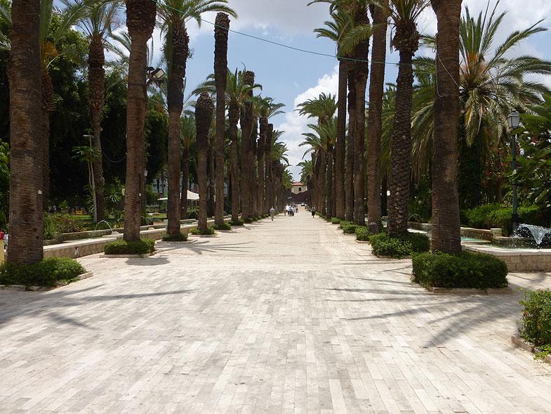 Пальмовая аллея в Ришон-ле-Ционе