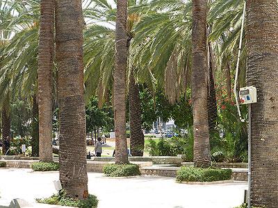 Пальмовая