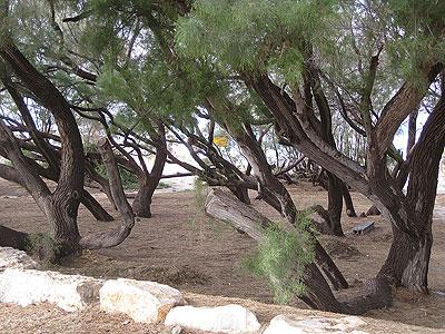 Palmachim