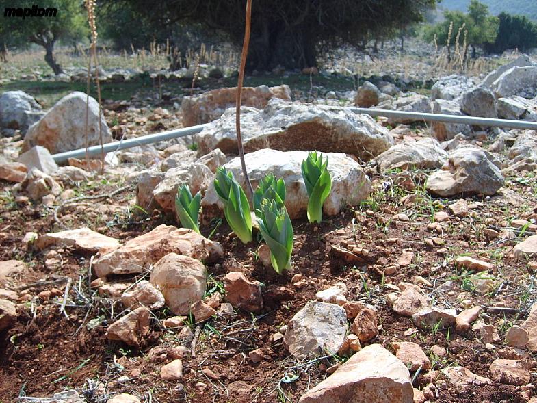 Верхняя Галилея