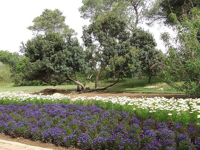 Рамат а-Надив возле Зихрон-Яакова